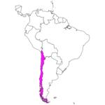 日本語でチリ/サンティアゴ Chile / Santiago in Japanese