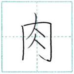 漢字を書こう 楷書 肉[niku] Kanji regular script